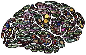 brain-744207__180