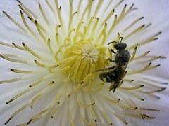 flower-1279497__180