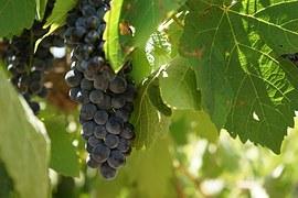 wine-1300182__180