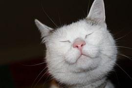 cat-1329956__180
