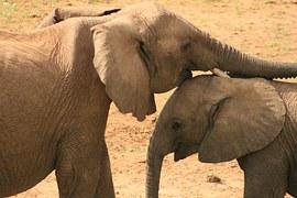 elephant-1256811__180