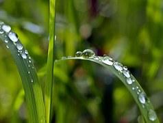 grass-1331703__180