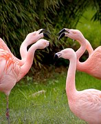 flamingos-1335042__180