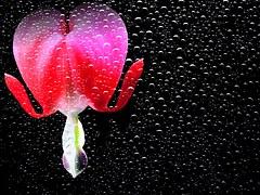 flower-1426754__180