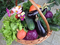 harvest-1225592__180