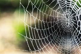 spider-silk-1287407__180