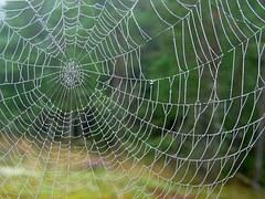 spider-web-1003537__180