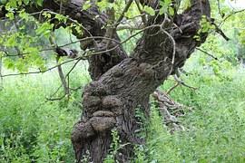 tree-1425842__180