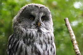 owl-1446668__180