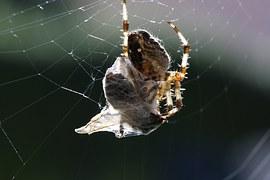 spider-776984__180
