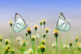 butterfly-1127666__180