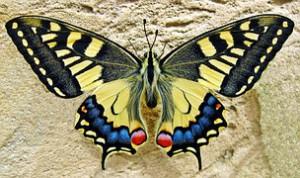butterfly-1228639__180