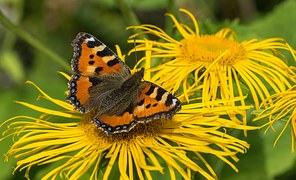 butterfly-1523717__180