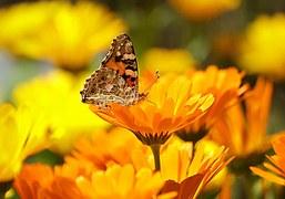 butterfly-196745__180