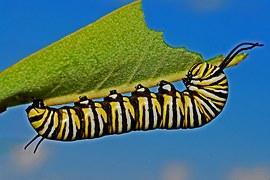 caterpillar-562104__180