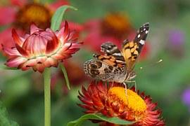 flowers-769453__180