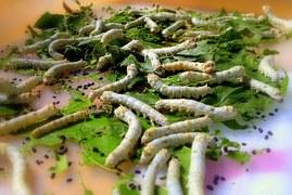 silkworm-109059__180