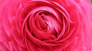 flower-1600616__180