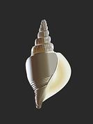 shell-1402252__180