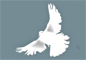 dove-153116_960_720