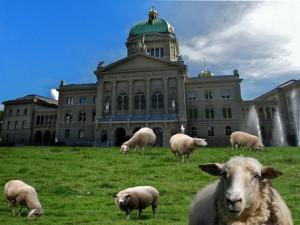 sheep-551852__340