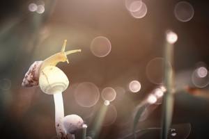 snail-2084656__340