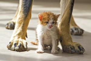 cat-1762288__340