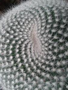 cactus-2251934__340