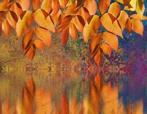 autumn-2635741__340