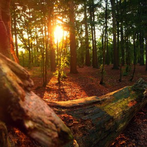 forest-746009_960_720